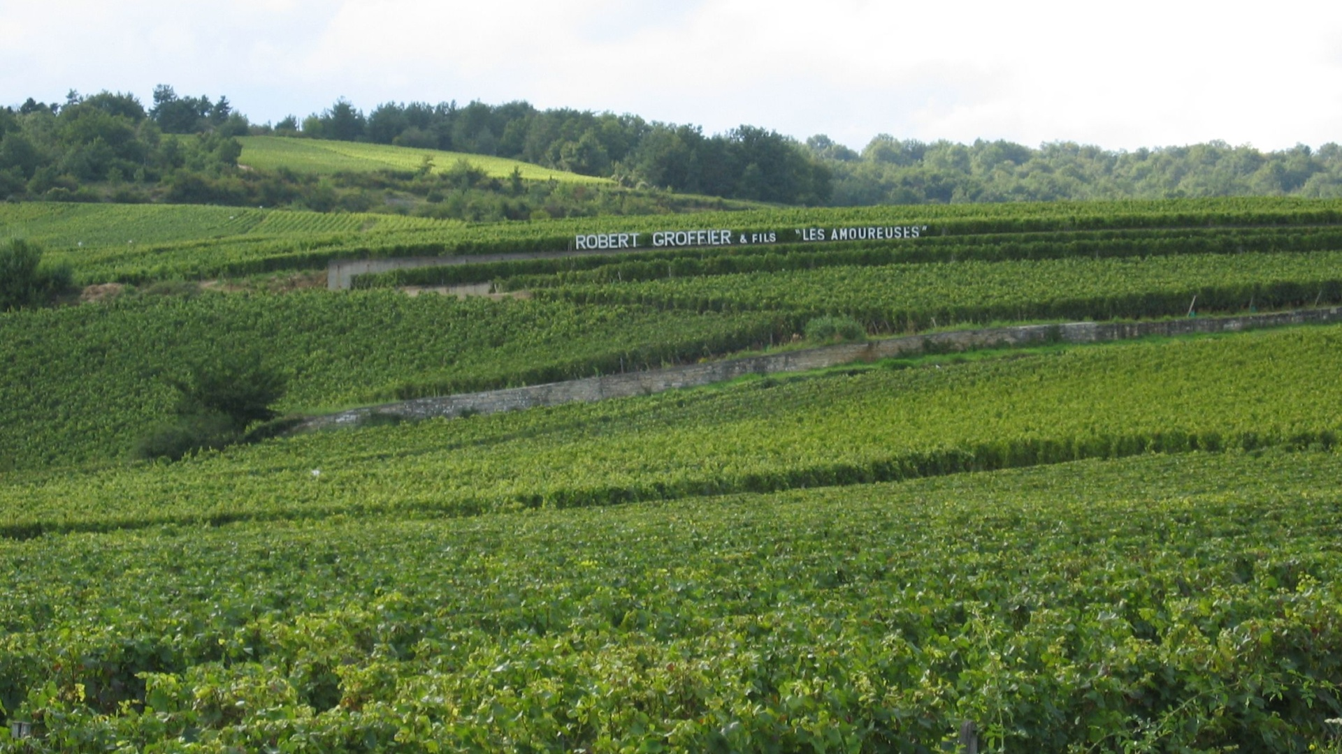 Robert-Groffier-Bourgogne-Côte-de-Nuits-Chambolle-Mussigny-Les-Amoureuses